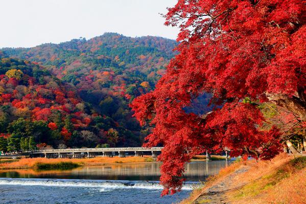 京都市の名所 ベスト10 - トリップアドバイザー